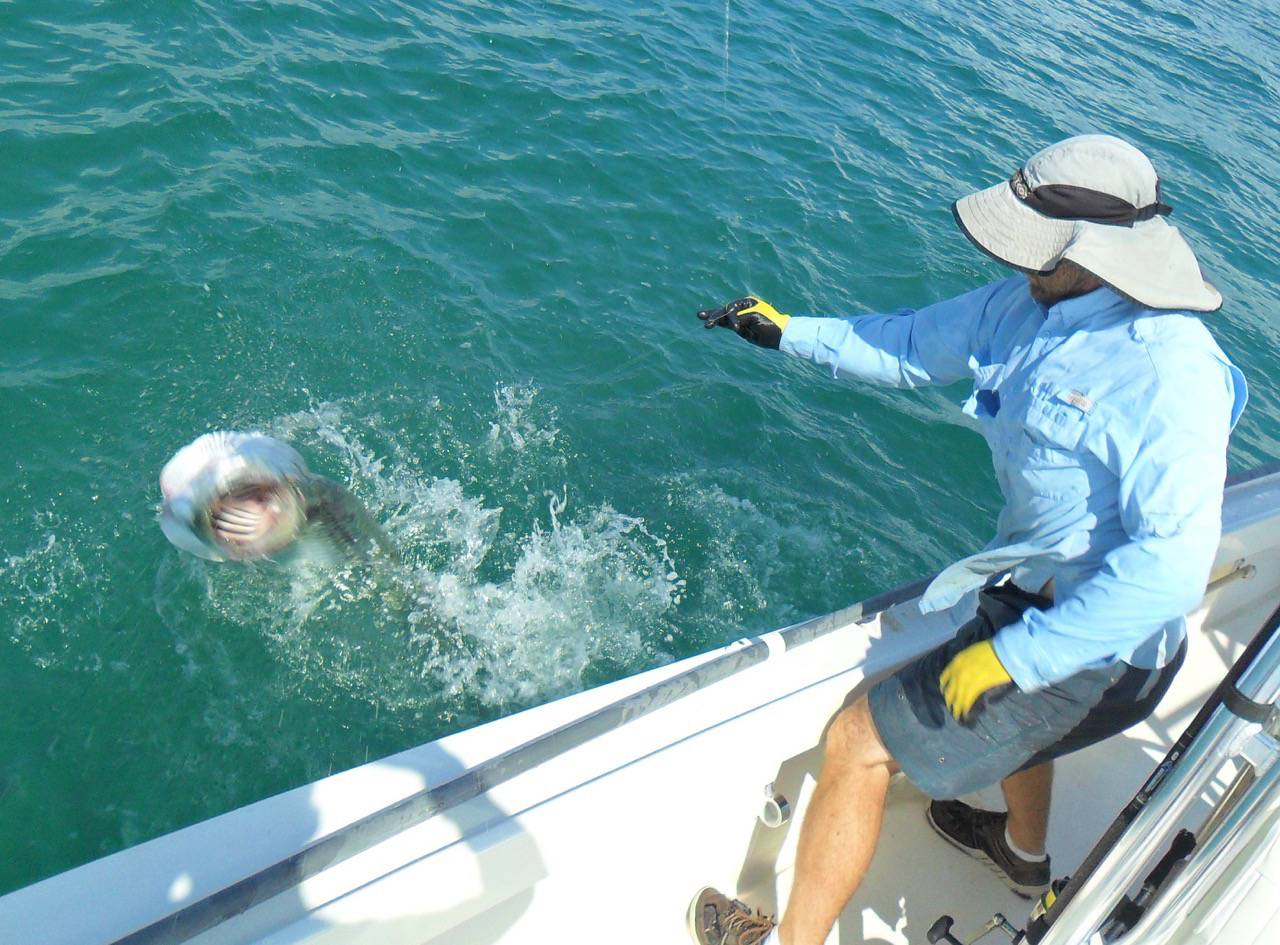 Blog tarpon fishing for Tarpon fishing charters